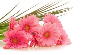 White Backgrounds Wallpaper-flower-bouquet-images