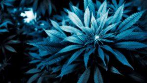 weed live wallpapers-marijuana-wallpaper-backgrounds-hd