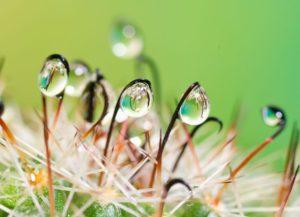 3d nature images-water-drops-photos