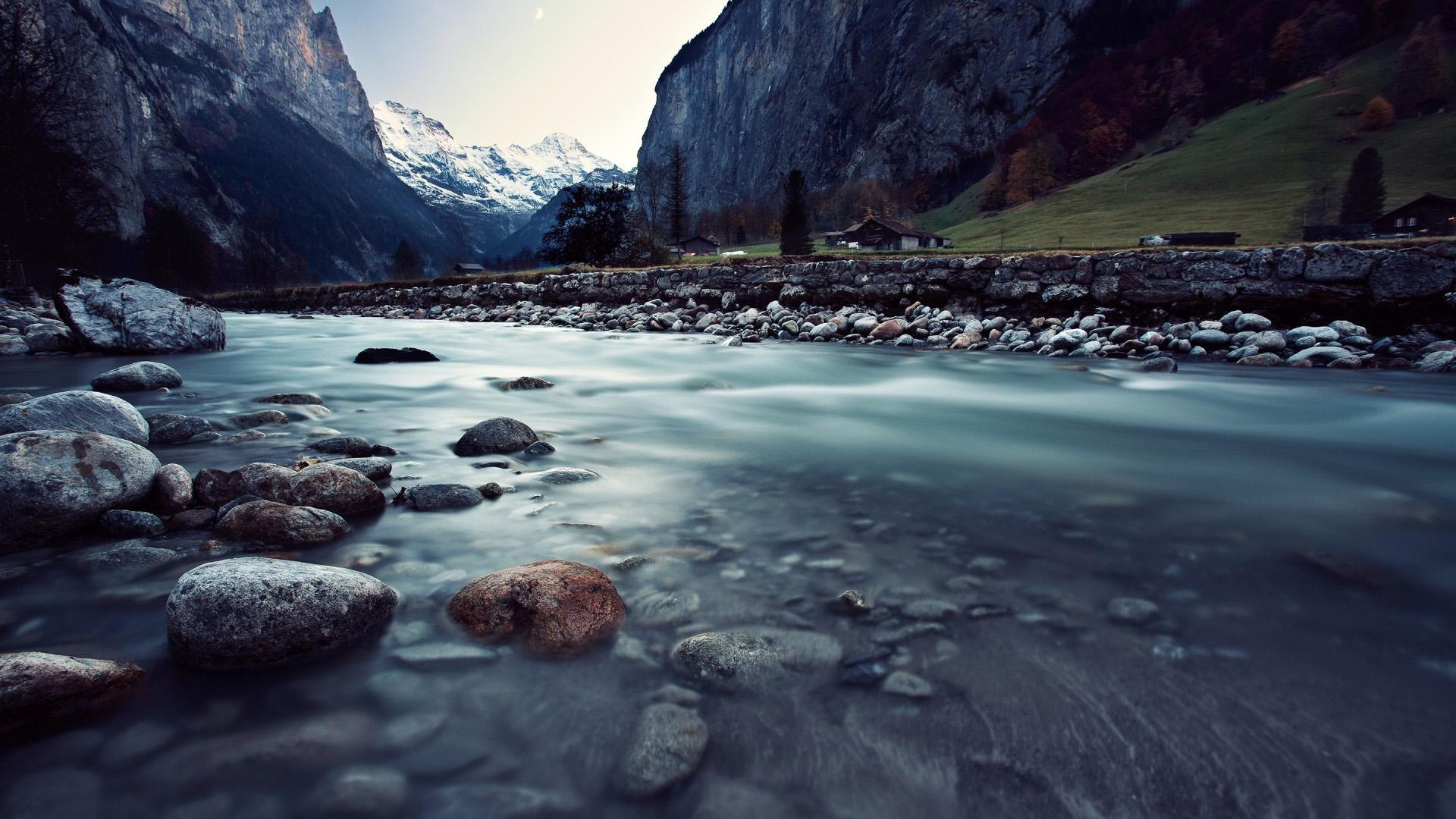 moose wallpaper nature - HD Desktop Wallpapers   4k HD