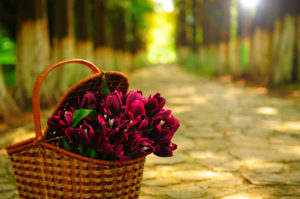 Download Wallpapers-nature-of-wallpapers-flowers-hd-landscapes-iphone