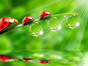 Live Wallpapers-ladybugs-glitter-grass-light