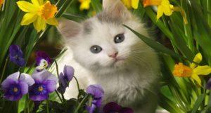 baby kitten wallpapers-kitten-in-the-spring-flowers