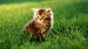 cat-hd image