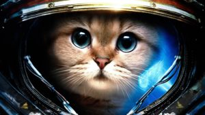 cool pictures-cat