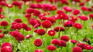 downloadfiles_wallpapers_summer_red_flowers images