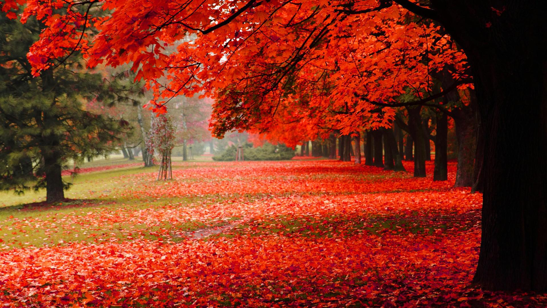 Hd scenery - Love nature wallpaper hd ...