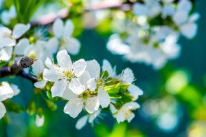 nature-hd-wallpaper-flower-10-white-flower-blue-sky-wallpapers-natural hd wallpaper