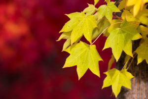 nature wallpapers hd-yellow leaf