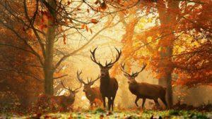 reindeer wallpapers-wallpaper