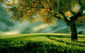 scenery wallpaper