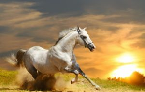 wild horse wallpapers-cavalli