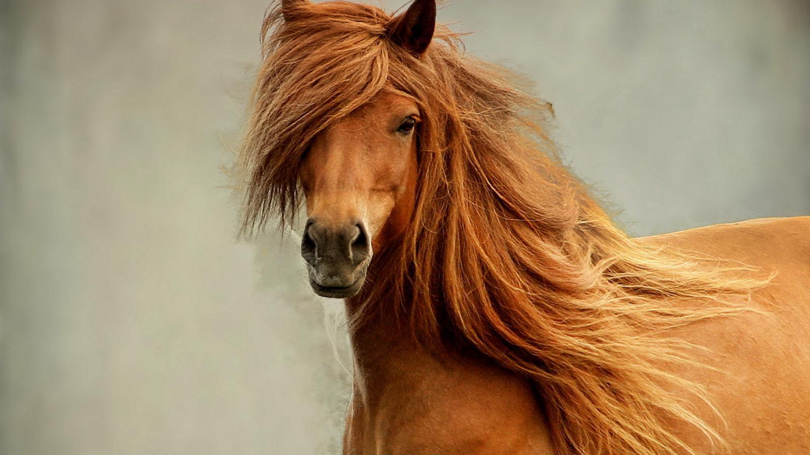 Wild Horse Wallpapers