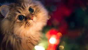 Beautiful-Innocent-Eyes-Cute-Cat-Wallpaper-cute images hd