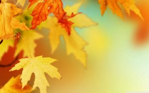 Fall-Leaves-Wallpaper-On-Wallpaper-natural background hd