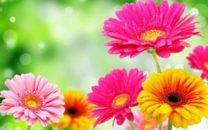 Spring-Flowers-images of flowers