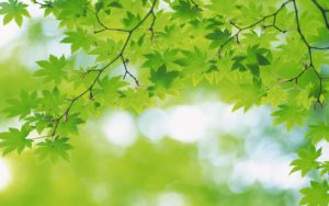 amazing-green-leaf-natures images