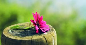 beautiful-flower-images of nature hd