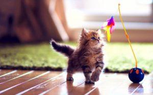 cute-kittens-playing-cute wallpaper hd