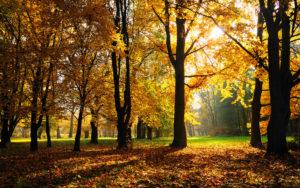 fall-season-wallpapers7.jpg