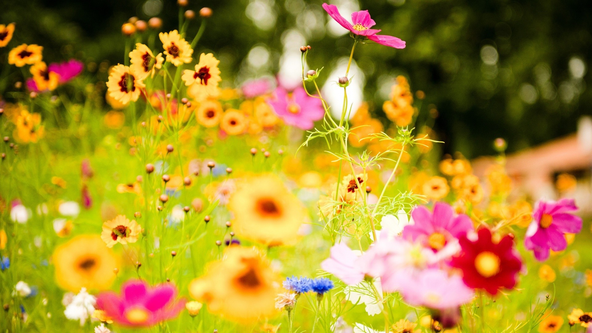 HD Wallpapers Nature Flowers 3d