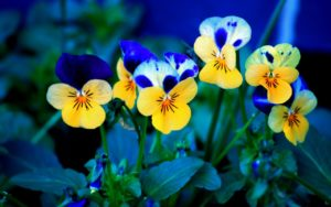 flowers-download free wallpapers