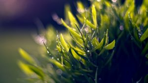free-nature-macro-wallpaper-1-nature pictures hd
