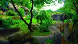 greenery-hd 1080p wallpapers