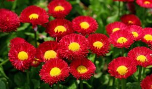 hd-flower-pictures of flowers