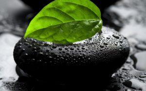leaf-full hd 1080p wallpapers
