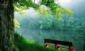 nature-nature picture