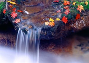 nature pic-hd