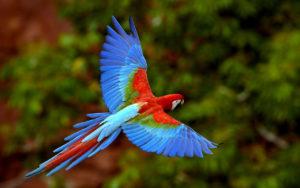 parrot-photos of nature