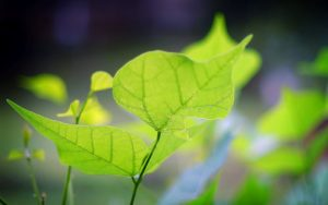 wallpaper downloads free- green leaf
