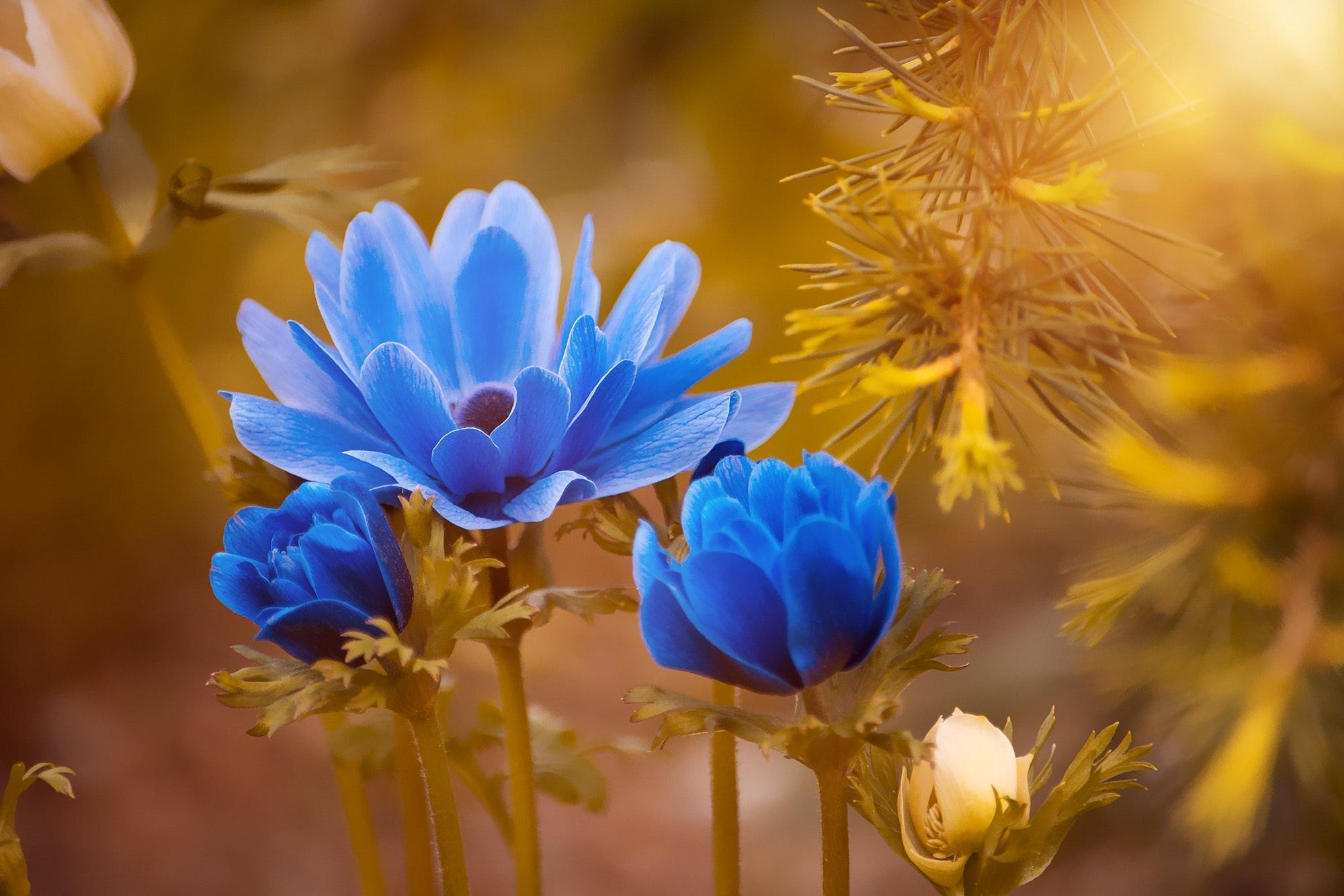 Hd Flower Image Wallpaper Download Free