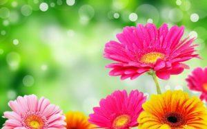 flowers wallpaper hd-13