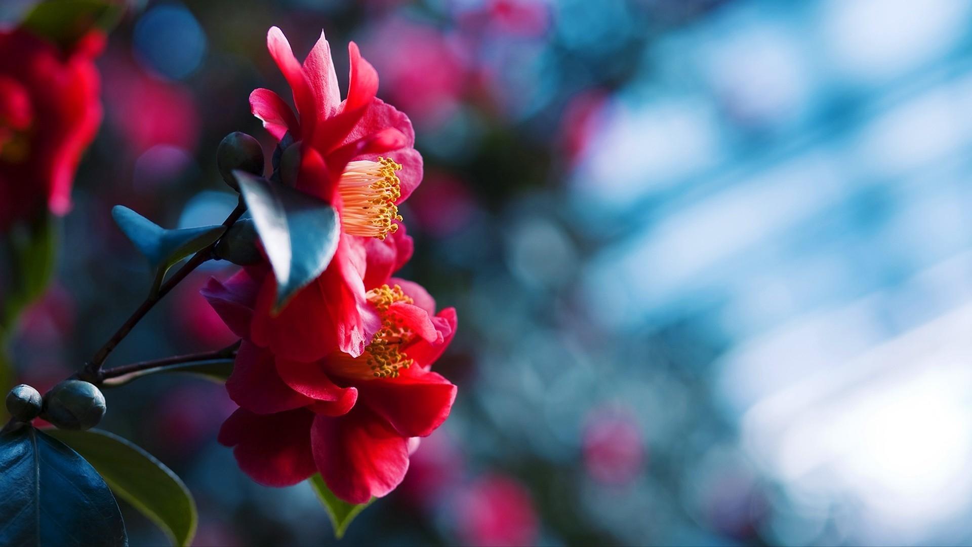 Desktop Backgrounds Hd Flowers
