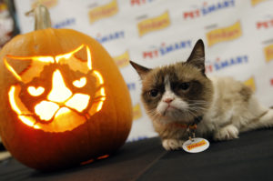 images of halloween cats-7