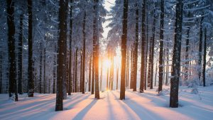 winter wallpaper-5